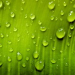 water_drops_IMG_00853